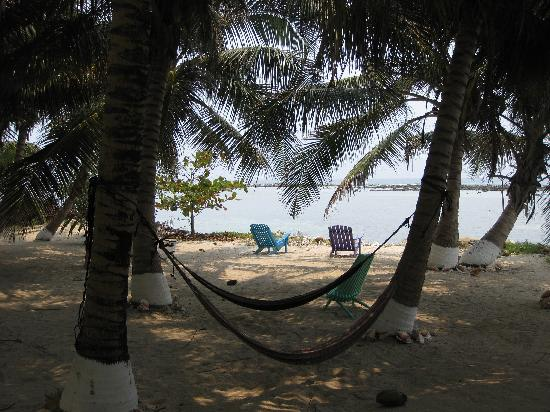 Tobacco Caye Lodge: Hammocks in the shade