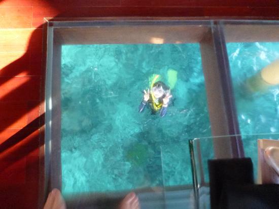 Villingili: 水上コテージの床の一部はガラス張りです。