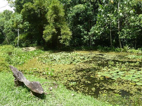 Reserva Biologica Caoba: Arapaimas pond