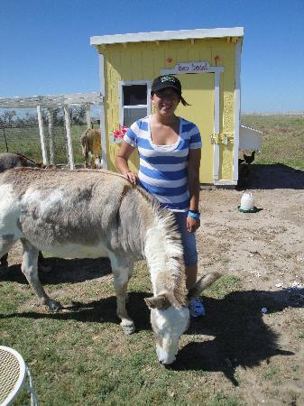 Circle View Guest Ranch: Feeding the burros (Yes, that is a burron in the chicken coop)