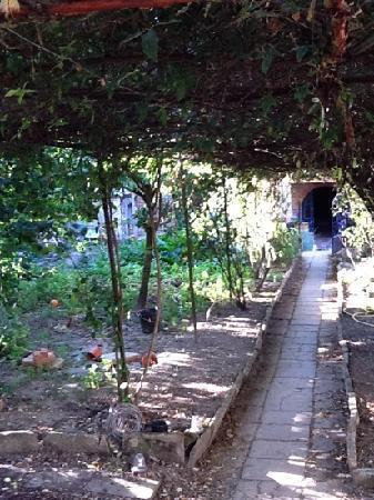 Ultreia Moissac: garden