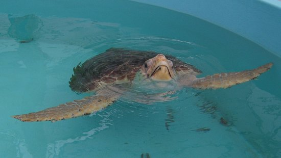 Juno Beach, Floryda: Loggerhead Marinelife Center