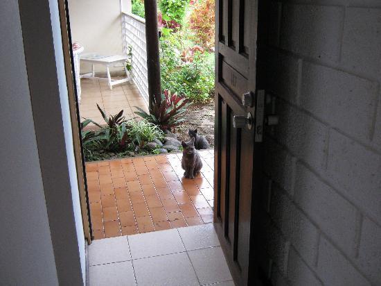 O'tai Hotel: The cute kittens