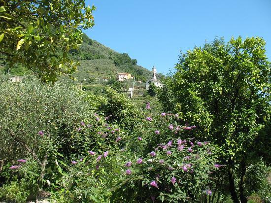 Villa Paggi Country House : In the garden of Villa Paggi