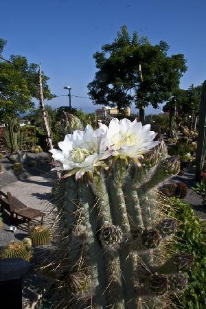 Giardini Ravino: flowers