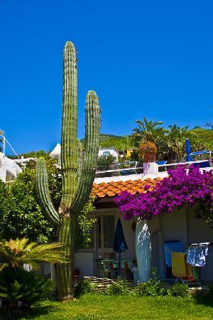 Giardini Ravino: big cacti