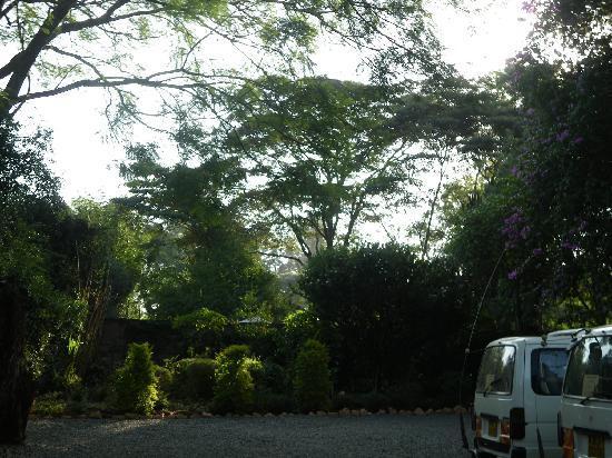 Sandavy Guest House - Kilimani: beautiful gardens