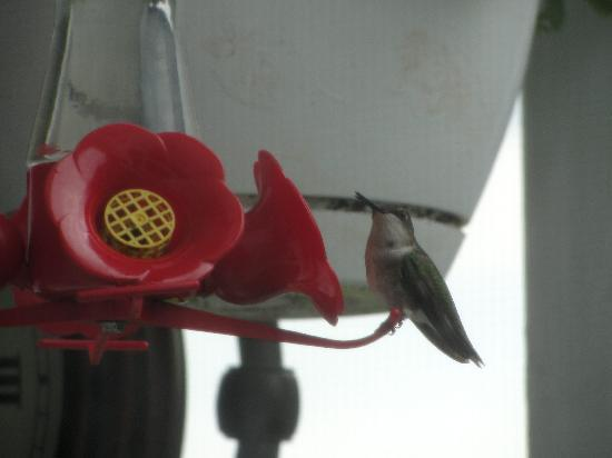 Seven Gables B&B: Watching the humming birds while we ate breakfast