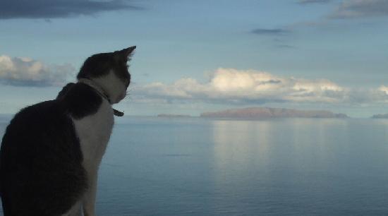 Casa Parsons B&B : Gizmo the Cat