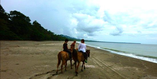 Caribe Horse Riding Club: balade Playa negra