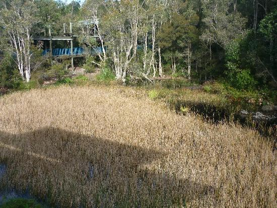 Kingfisher Bay Resort: view from deck of marshland