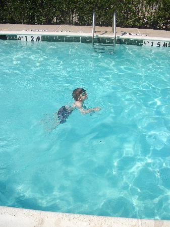 Staybridge Suites Dallas - Addison: Swimming in the pool at Staybridge Suites, North Dallas