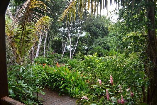 Au Jardin des Colibris: Vue depuis la terrasse de la case