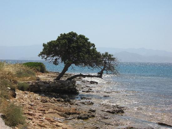 Alexandros Studio Apartments: Tree on seaside