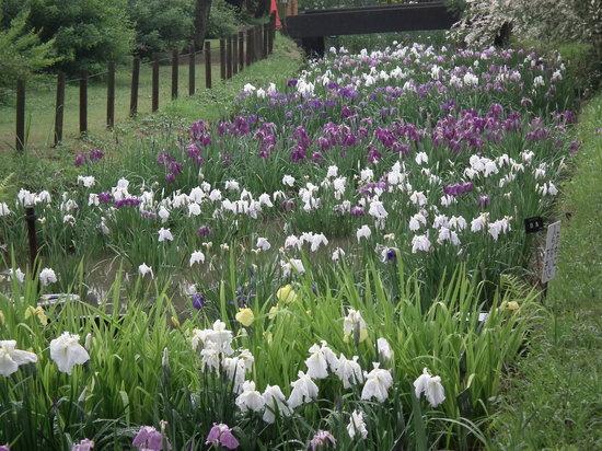Kanagawa Prefectural Ofuna Botanical Garden