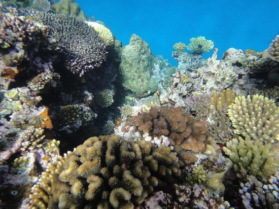 Vanuatu: Coral - Congoola Tour