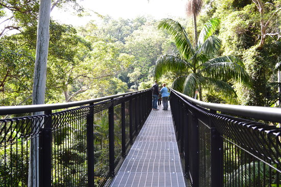 Tamborine Mountain, Australia: first sky walk