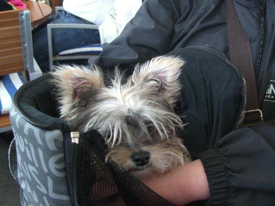 Deutsches Auswandererhaus: Hund in Tragetasche