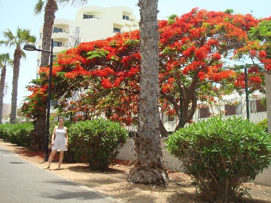 Dream Hotel Noelia Sur : Streets clean and colorful trees