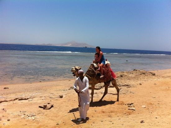 Tirana Aqua Park Resort: camel ride at beach