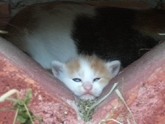 Bauernhof Berger: kleine Kätchen