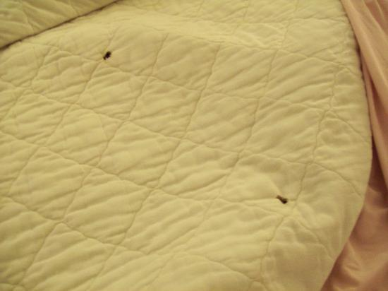 Canton, MS: stained, burned bedspread