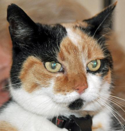 The Old School Bed and Breakfast: Wendy's lovely cat
