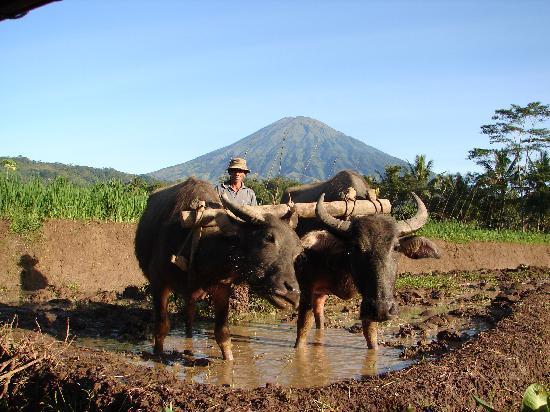 Villa Sumbing Indah: Sommes-nous vraiment en 2011 ? Photo prise depuis la vérande de notre chambre.