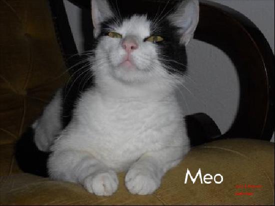 Agriturismo il Geranio : il gattino Meo