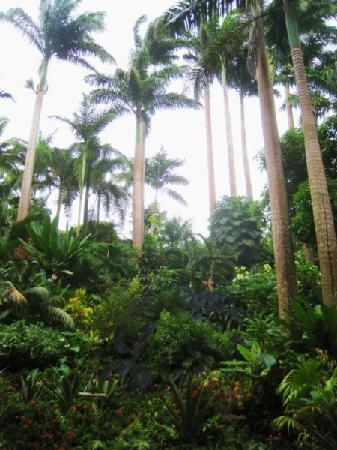 Saint Joseph Parish, Barbados: Hunte's Gardens