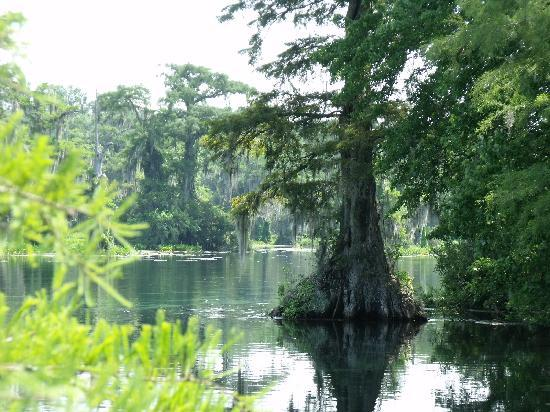 Edward Ball Wakulla Springs State Park: Maybe the Creature from the Black Lagoon still lives here?