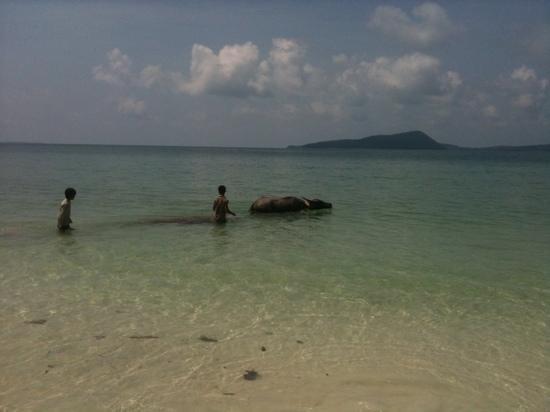 Paradise Bungalows: le buffle de l'hôtel envoyer travailler au village