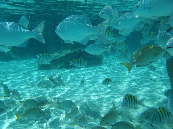 El Cozumeleno Beach Resort Snorkeling View