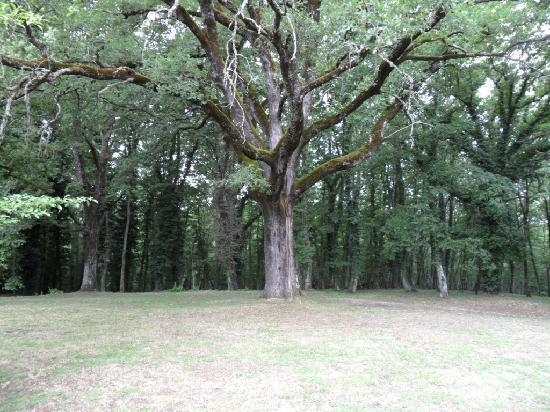 Agriturismo Natura e Salute: Verso il bosco...