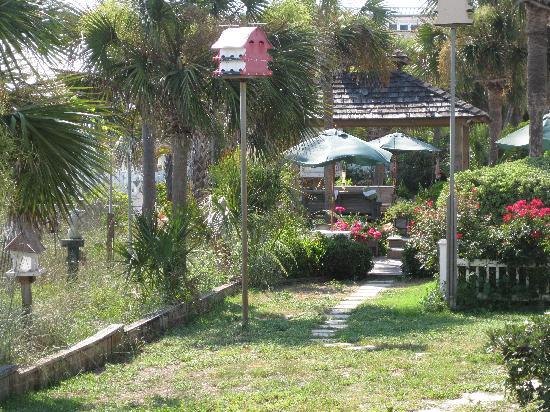 Driftwood Inn: Back garden
