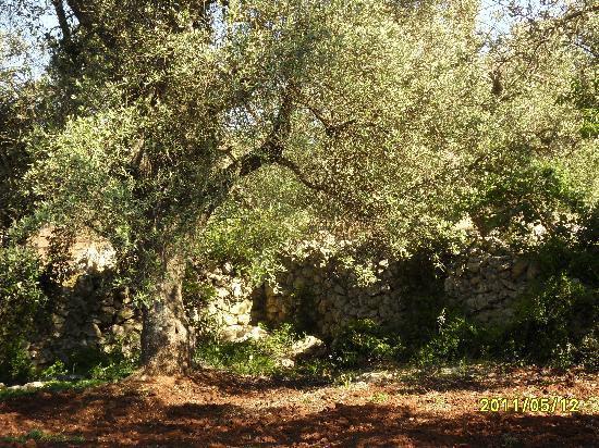 Carovigno, Itália: giardino pietrafitta