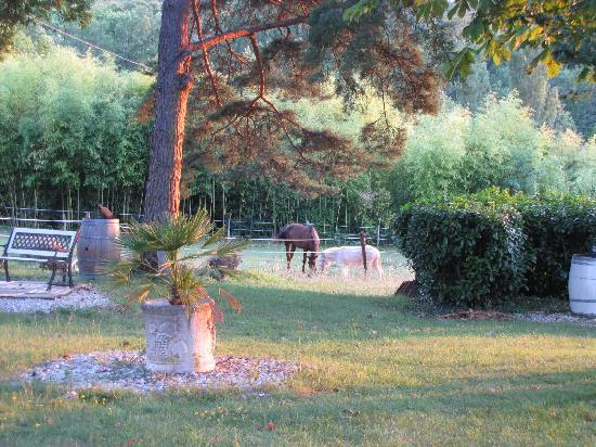 L'Assiette Gourmande: Another view of the garden