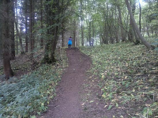 Welburn Lodge: Walk to The Stone Trough