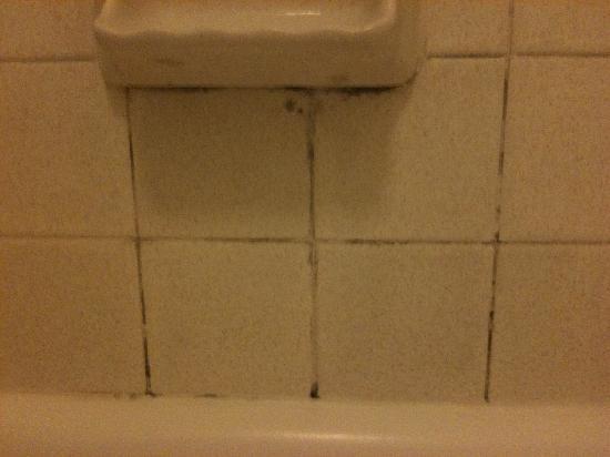 La Quinta Inn Temple : Shower Mold;(