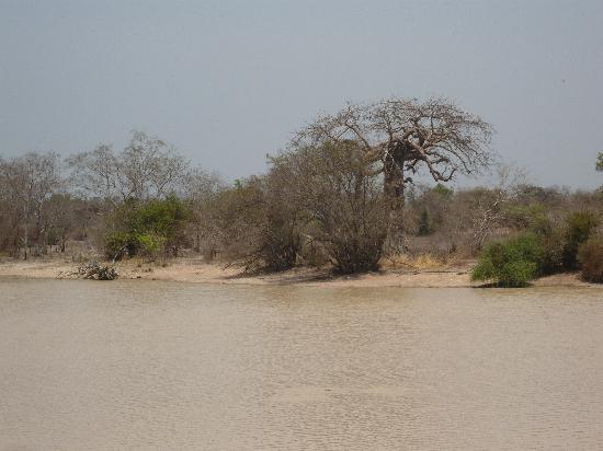 Pendjari National Park, Benin: Teich mit Baobab