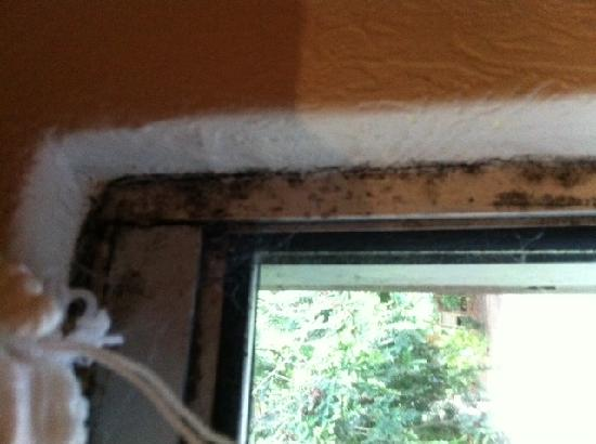 The Fisherman's Cot: Mould around the windows