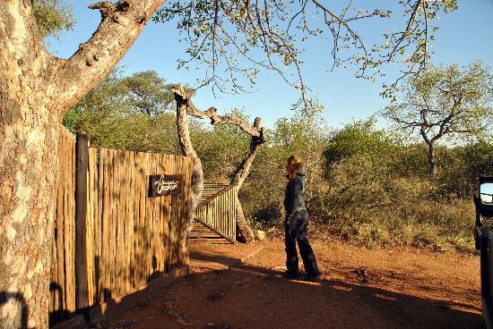 Singwe River Lodge: bush lodge for coffee break!