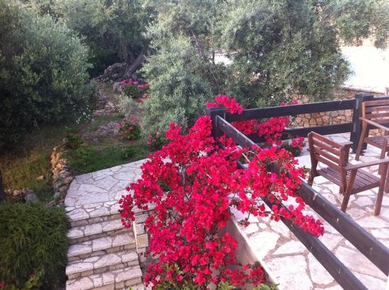 Idilli Villas Lefkada: flowers