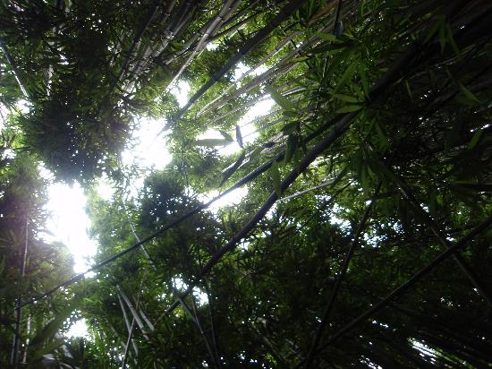 Bambuswald Picture Of Maui Hawaii Tripadvisor
