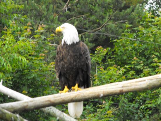 Oaklawn Farm Zoo 이미지