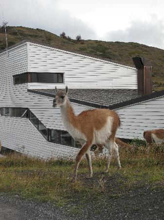 Explora Patagonia - All Inclusive : Greeter at the Hotel