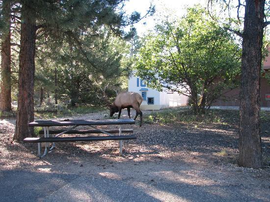 Mather Campground: Camping