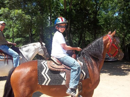 Hickory Hollow Horse Farm: spirit