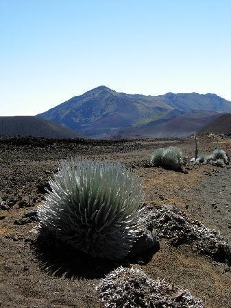Haleakala Crater: View from Crater Floor looking ENE