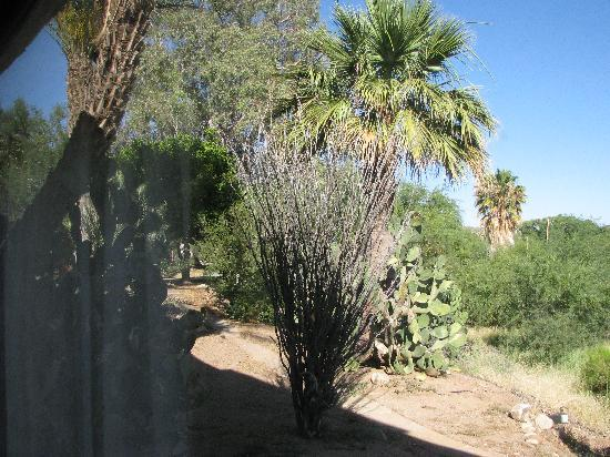 Best Western Rancho Grande : View from our back window
